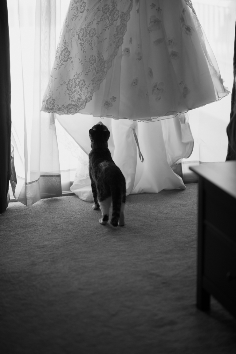 Wedding Portfolio for Meghan Elizabeth Photography Cat with the wedding dress